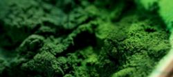 Spirulina Organic